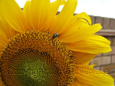 Photography Watermark Examples